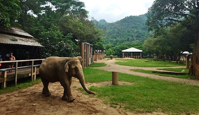 Elephant Sanctuary Chiang Mai